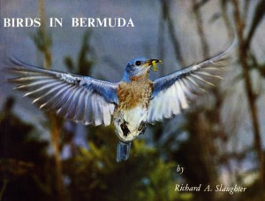 Birds in Bda small